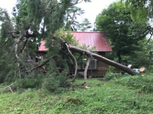 危険木伐採