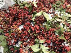赤い山椒の実